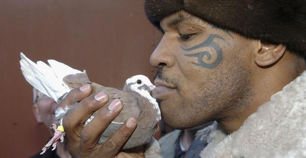 mike-tyson-passione-par-les-pigeons