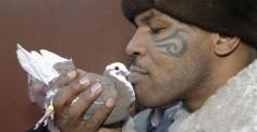 Les pigeons de Tyson
