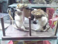 WTF les rats ?!